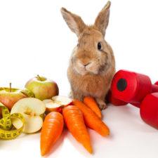 Doplňky výživy