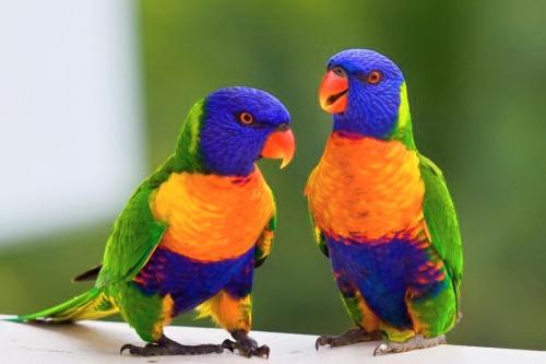 Exotické ptactvo