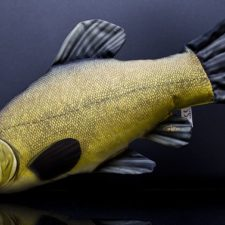 Tench 2