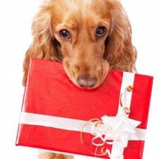 Výprodej a dárky