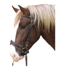 Uzdečky a udidla pro koně