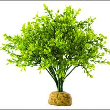 rostliny plastové