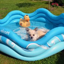 Alcott nafukovací bazén pro psy
