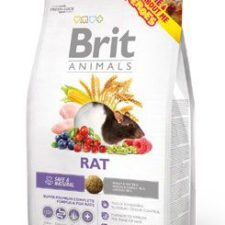 Brit Animals Rat 1