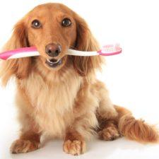 Zuby a dásně