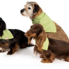 """Šátek bavlna""""Falco"""" zavazovací zelený s puntíkem vel. M"""